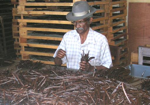 Piments de l'île de la Réunion  - Le Rougailleur